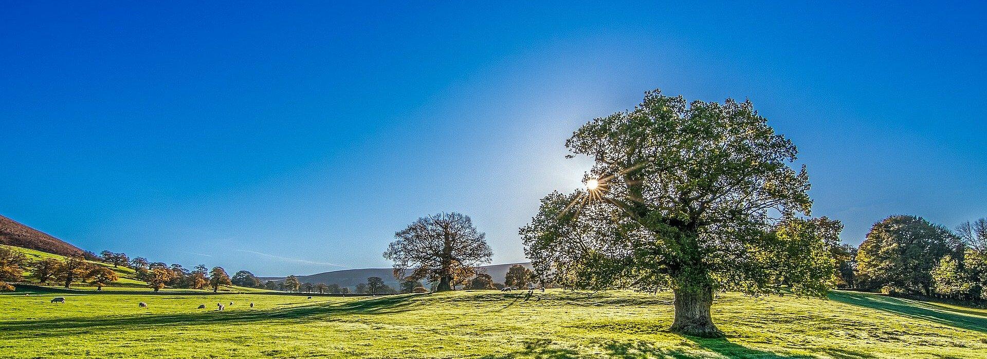 Imagem retrata um campo com árvores e um céu bem azul