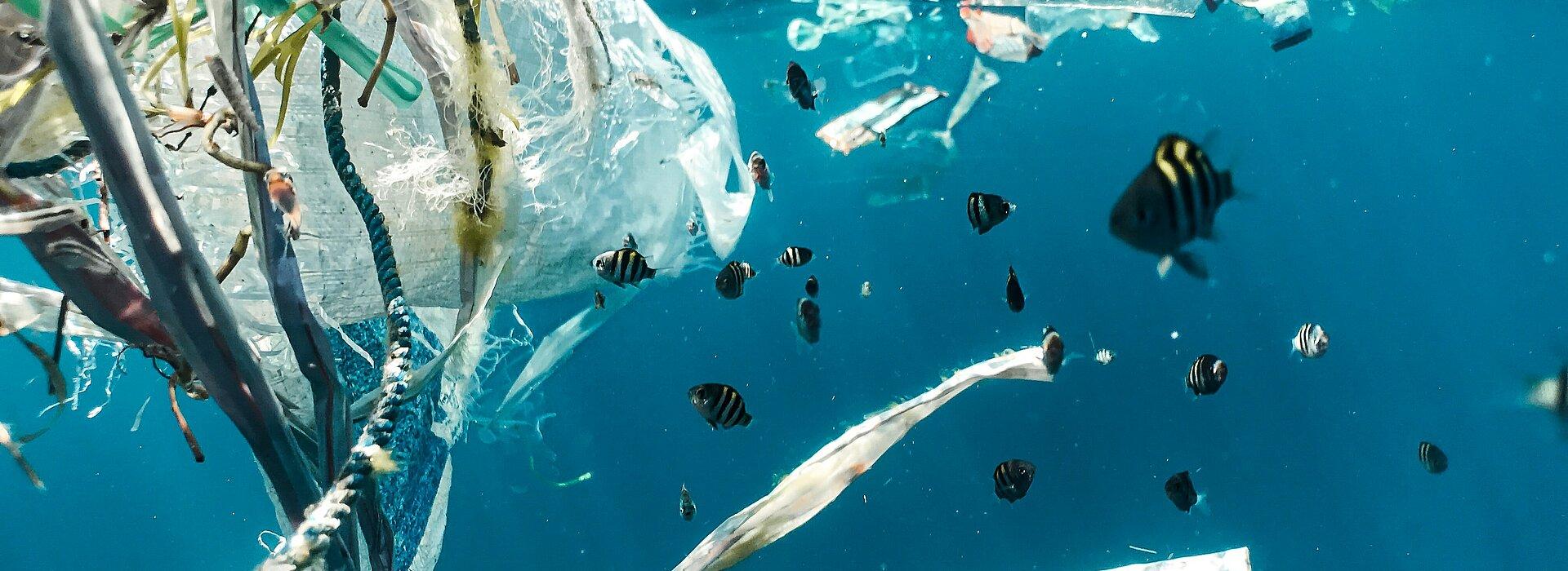 A foto foi tirada embaixo do mar e mostra lixos perto dos peixes.