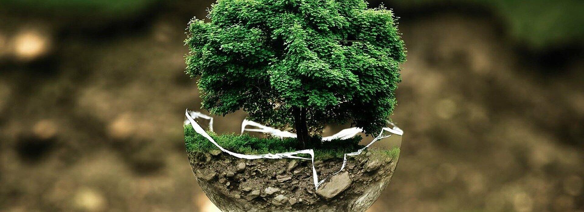Árvore centralizada.